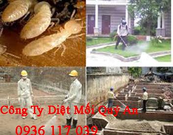 Dịch vụ diệt mối tận gốc uy tín tại Đại học Nông Lâm HCM