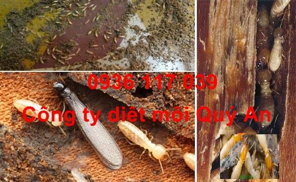 Chuyên Diệt mối tận gốc các công trình tại Tân Phú - diet moi tan goc cac cong trinh tai tan phu