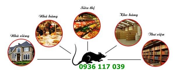 Dịch vụ diệt chuột cho các trường học tại sài gòn