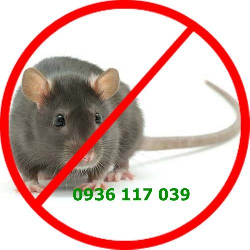 Chuyên diệt chuột tận gốc tại hcm – chuyen diet chuot tan goc tan goc tai hcm