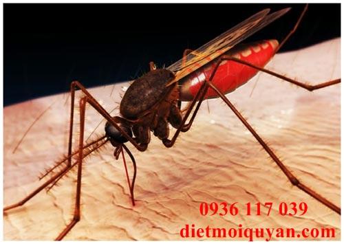 Dịch vụ phun thuốc diệt muỗi tại quận 1