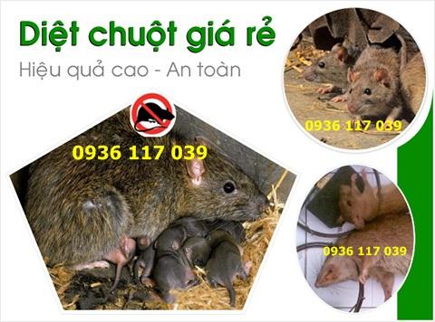 Công ty diệt chuột nhà ở tại quận Tân Bình