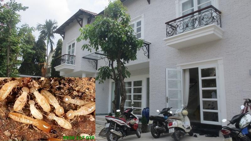 Diệt Mối Tận Gốc Tại Tân Bình - Diet moi tan goc tai tan binh
