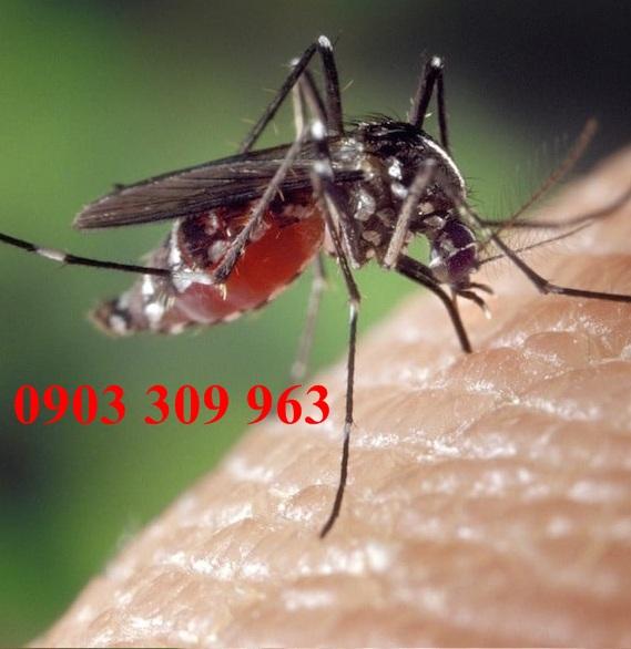 Công ty diệt muỗi chuyên nghiệp tại Hóc Môn